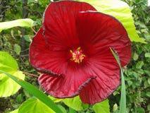 Fleur en spirale étonnante 1 Image libre de droits