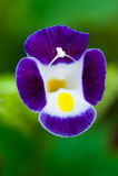 Fleur en stationnement d'automne Photographie stock libre de droits