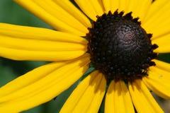 Fleur ensoleillée Image stock