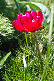 Fleur ensoleillée de source Images stock