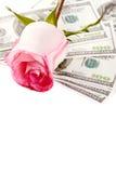 Fleur et argent de Rose Photo libre de droits