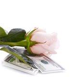 Fleur et argent de rose de rose Image libre de droits