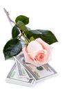 Fleur et argent de rose de rose Photo stock
