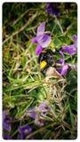 Fleur et bourdon Image libre de droits