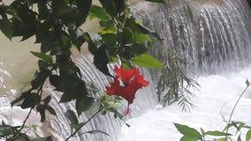 Fleur et cascade rouges Photographie stock libre de droits