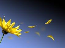 Fleur et ciel Image libre de droits