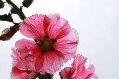 Fleur et ciel Photos stock
