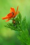 Fleur et coccinelle Photo stock
