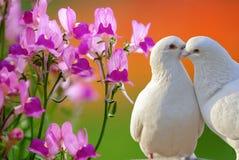 Fleur et colombes d'orchidée de guindineau Photo libre de droits