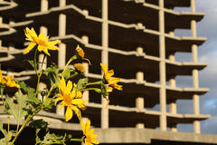 Fleur et construction Photographie stock