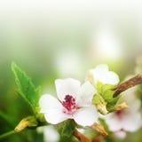 Fleur et contexte vert Image stock