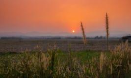 Fleur et copyspace au champ quand temps de coucher du soleil, foyer sélectif, image libre de droits