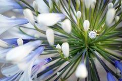 Fleur et engagement Photo stock