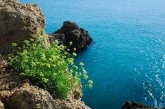 Fleur et falaise Photo libre de droits