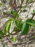 Fleur et feuilles nature image stock