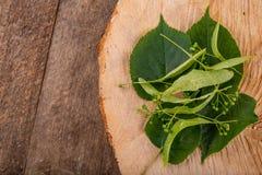 Fleur et graines de limettier sur un morceau de bois en bois Matériel pour le thé savoureux et sain photographie stock