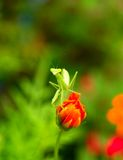 Fleur et insecte 10 images stock