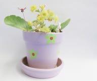 Fleur et insecte jaunes dans des pots d'argile Photographie stock libre de droits