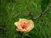 Fleur et l'oiseau Images libres de droits