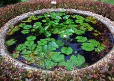 Fleur et lame de lotus Image libre de droits