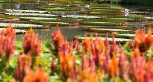 Fleur et lotus oranges 61 de fond Photos libres de droits