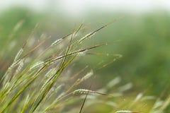 fleur et lumière colorées d'herbe Image stock