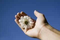 Fleur et main contre le ciel bleu images libres de droits