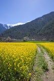 Fleur et montagne neigeuse Photographie stock