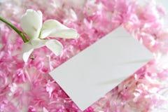Fleur et pétales Images stock