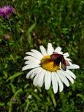 Fleur et papillon photographie stock libre de droits
