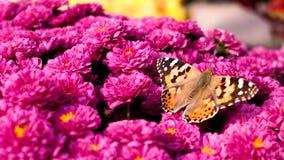Fleur et papillon Image libre de droits