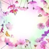 Fleur et papillon roses de cosmos dans le pré Photo stock