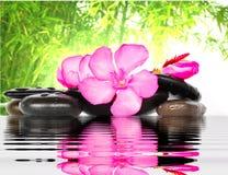 Fleur et pierre Photo stock