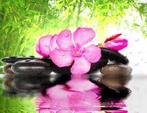 Fleur et pierre Image stock