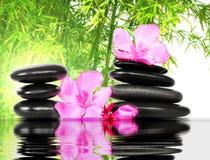 Fleur et pierres Image stock