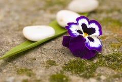 Fleur et pierres de zen Photographie stock libre de droits