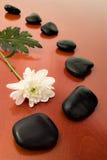 Fleur et pierres noires Image libre de droits