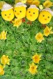 fleur et poulet Photos libres de droits