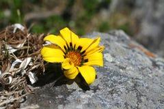 Fleur et roche Photographie stock libre de droits