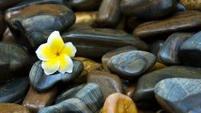Fleur et roches Photo stock