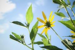 Fleur et soleil Image libre de droits