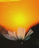 Fleur et soleil Photographie stock