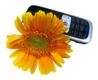 Fleur et téléphone portable jaunes (chemin clippining) Image stock