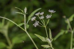 Fleur et toile d'araign?e photographie stock libre de droits