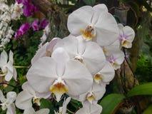 Fleur et tournesol Image stock