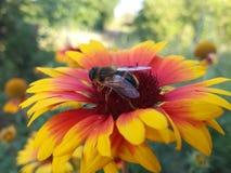 Fleur et une abeille image libre de droits
