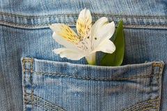 Fleur et une déclaration de l'amour Photos libres de droits