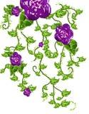 Fleur et vignes Photo stock