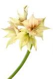 Fleur exotique photographie stock libre de droits