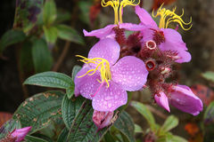 Fleur exotique Photos libres de droits